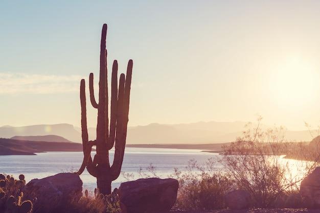 Paysages de l'arizona, états-unis