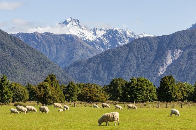 Paysages de l'île du sud alpes du sud nouvelle-zélande