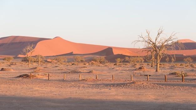 Les paysages pittoresques de sossusvlei et de deadvlei, de l'argile et du sel avec des acacias tressés entourés de dunes de sable majestueuses