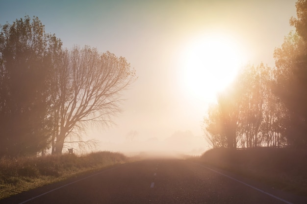 Paysages ruraux brumeux étonnants au matin. belle nature néo-zélandaise