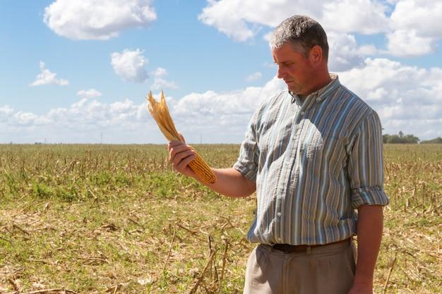 Paysan dans les chaumes de la récolte de maïs