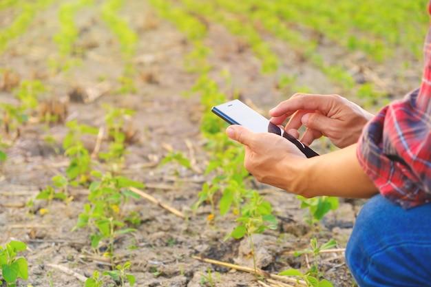Paysan, utilisation, mobile, vérification, rapport, soja, ferme, copie, espace