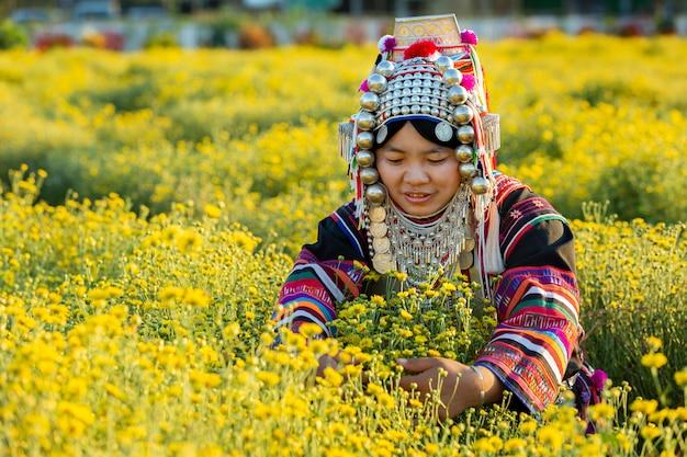 Les paysans cueillent des chrysanthèmes aux fleurs jaunes ou dendranthema indicum l. sur les terres agricoles.