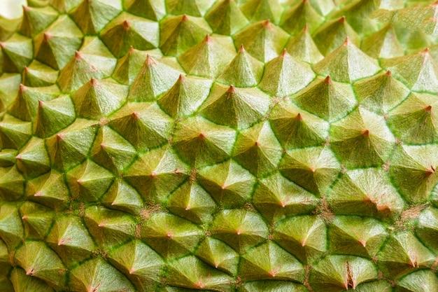 Peau durian / gros plan de la texture des fruits tropicaux durian