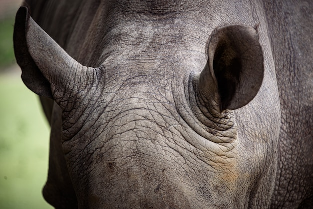 Peau de rhinocéros, texture de peau de rhinocéros pour le fond