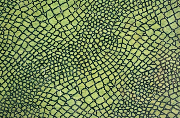 Peau de serpent vert