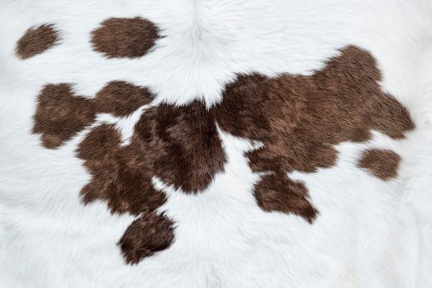 Peau de vache blanche avec fond de taches brunes