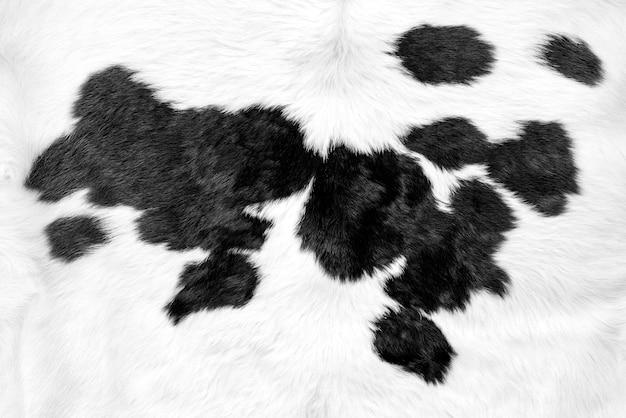 Peau de vache blanche avec fond de taches noires