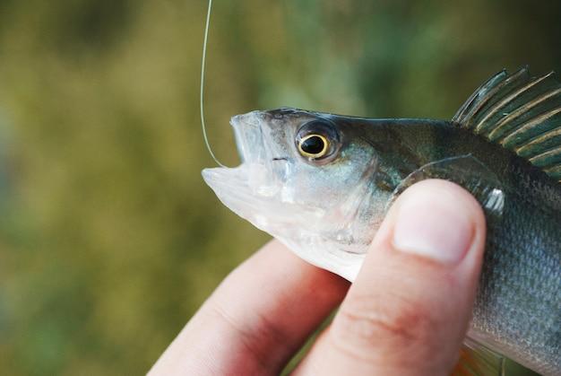 Pêcheur tenant un poisson à la main