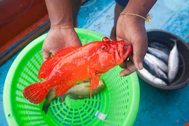 Pêcheur, tenue, vermoupe, poisson, pêche, bateau
