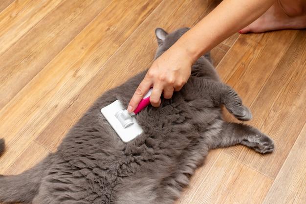 Peigner les cheveux d'un chat gris