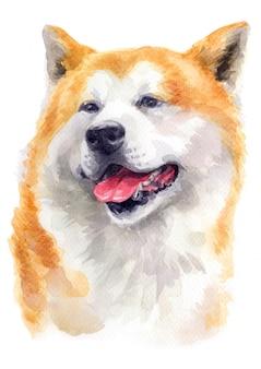 Peinture à l'aquarelle d'akita