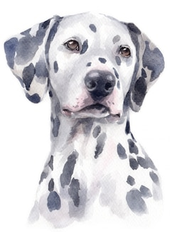 Peinture à l'aquarelle de dalmatien