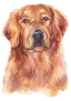 Peinture à l'aquarelle de golden retriever
