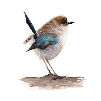 Peinture aquarelle oiseau mignon