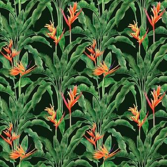 Peinture aquarelle oiseau de paradis fleurs fleuries de fond transparent coloré