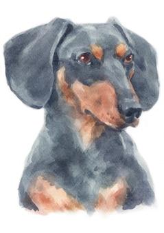 Peinture à l'aquarelle de teckel