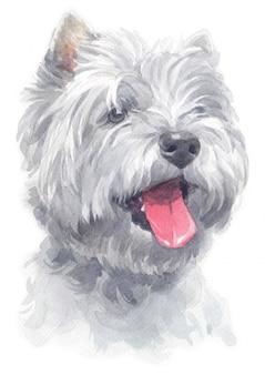 Peinture à l'aquarelle de west highland white terrier