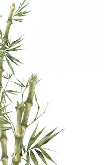 Peinture illustration aquarelle de feuilles de bambou