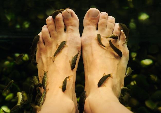 Peler les pieds des poissons.