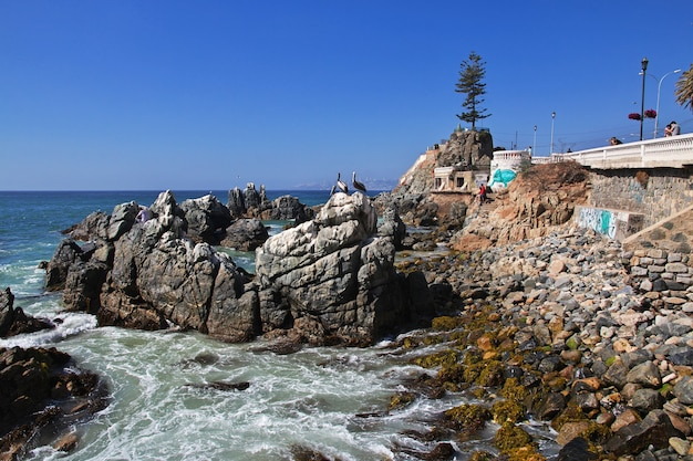 Pélican sur la côte de vina del mar au chili