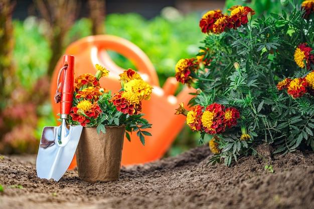 Pelle et pot avec des fleurs de souci pour la plantation dans le jardin. jardinage et floriculture