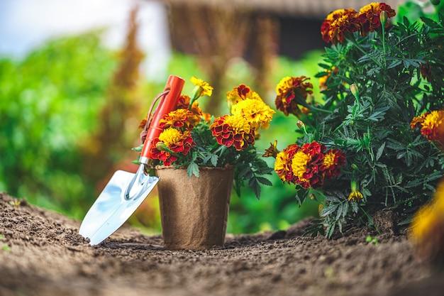 Pelle et pot avec des fleurs de souci pour la plantation dans le jardin