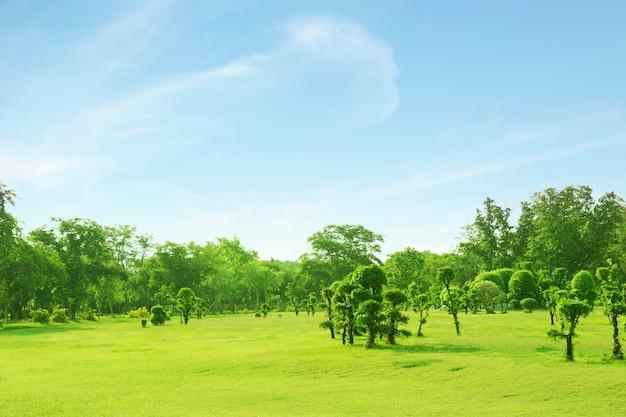 Pelouse et arbres vert avec belle pelouse
