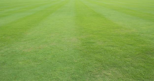 Pelouse ou champ d'herbe verte fraîche