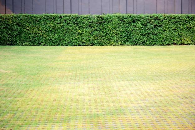 Pelouse dans le jardin avec fond.