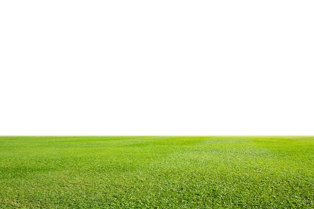 Pelouse d'herbe verte fraîche isolé sur fond blanc