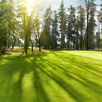 Pelouse verte avec des arbres dans le parc sous la lumière du soleil