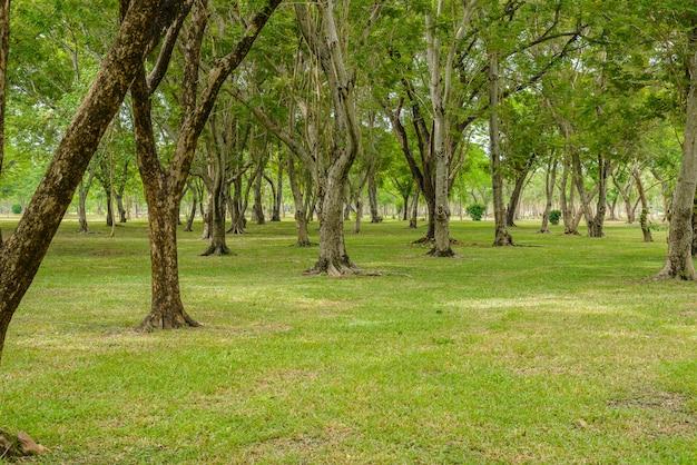 Pelouse verte avec des arbres dans le parc