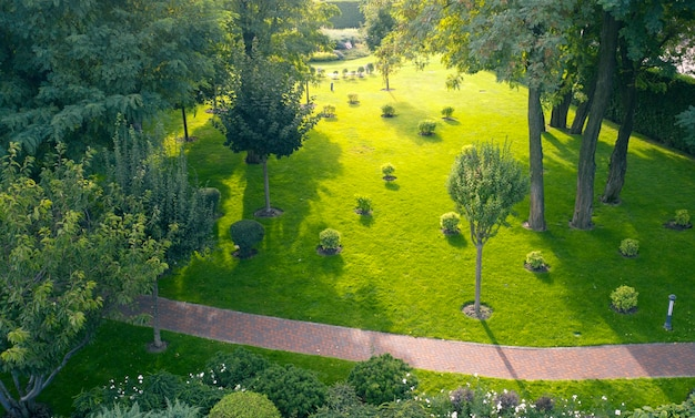 Pelouse verte et pelouse possible dans le parc à l'aube.