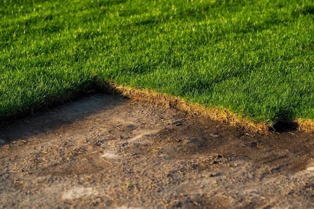 Pelouse verte pour la plantation et l'aménagement de pelouses, gazon dans la jardinerie