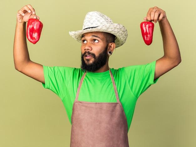 Penser un jeune jardinier afro-américain portant un chapeau de jardinage tenant et regardant du poivre isolé sur un mur vert olive