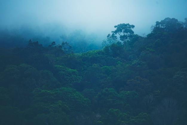 Pente de montagne boisée dans les nuages bas avec les conifères à feuilles persistantes enveloppés dans la brume