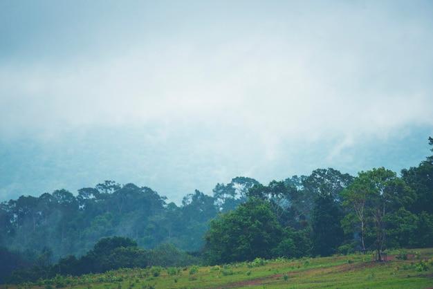 Pente de montagne boisée dans les nuages bas avec les conifères à feuilles persistantes enveloppés