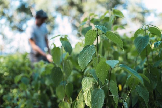 Pépinière forestière. petites plantes d'espèces autochtones locales d'amérique latine. environnement.