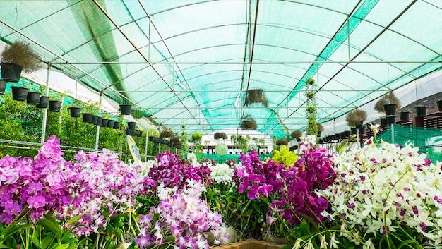 Pépinière d'orchidées colorée