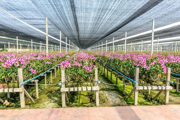 Pépinière d'orchidées
