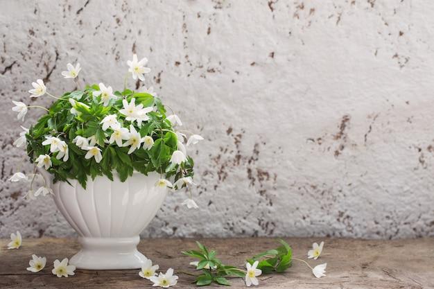 Perce-neige blanc sur le vieux mur