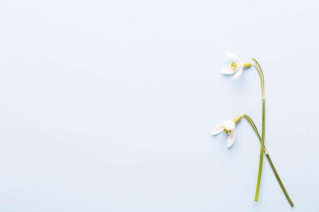 Perce-neige fraîche sur bleu avec place pour le texte. carte de voeux de printemps. fête des mères. mise à plat.