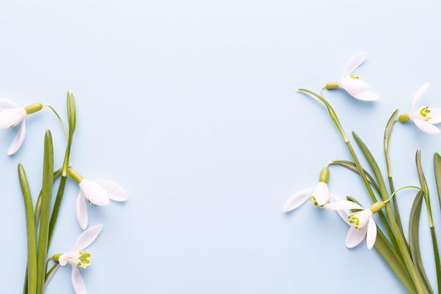 Perce-neige fraîche sur fond bleu avec place pour le texte. carte de voeux de printemps. fête des mères. mise à plat.