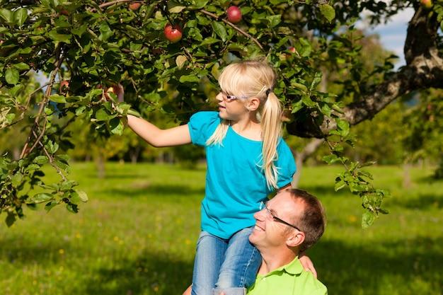 Père et fille cueillant des pommes