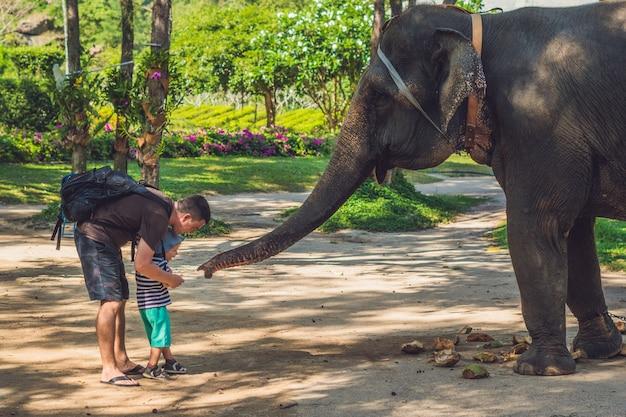 Père et fils nourrissent l'éléphant dans la forêt tropicale