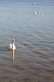 Le père signe blanc et suivi de sa famille sur le lac
