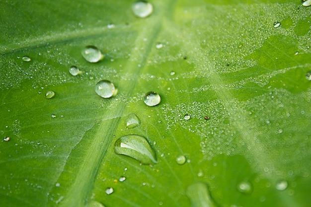 Perle d'eau goutte sur feuille verte