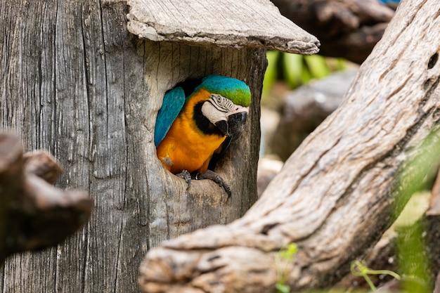 Perroquet ara coloré dans le parc