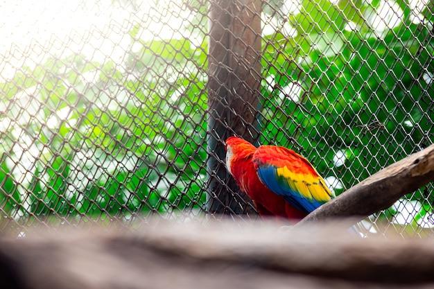 Perroquet De Bel Oiseau Coloré Photo Premium